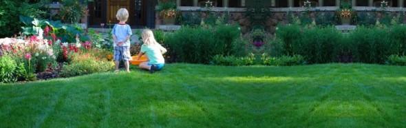 Irmo Organic Lawn Care