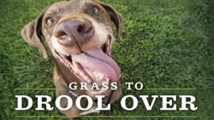 Columbia organic weed control for pets